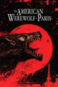 Amerykański Wilkołak w Paryżu CDA