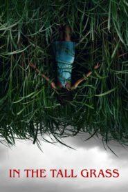 W wysokiej trawie CDA