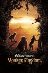 Monkey Kingdom CDA
