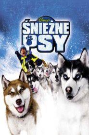 Śnieżne psy CDA