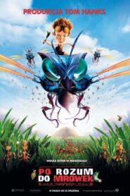 Po rozum do mrówek CDA