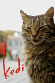 Kedi – sekretne życie kotów CDA