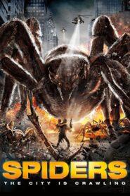 Spiders CDA