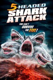 Pięciogłowy rekin atakuje CDA