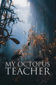 My Octopus Teacher CDA