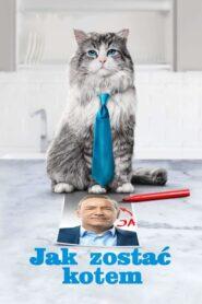 Jak zostać kotem CDA