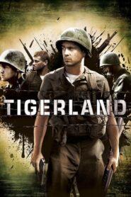 Kraina Tygrysów CDA