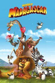 Zakochany Madagaskar CDA