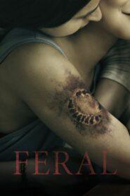 Feral CDA