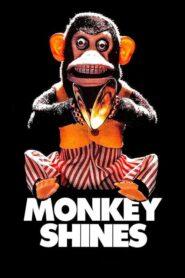 Małpia intryga CDA