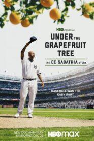 Under The Grapefruit Tree: The CC Sabathia Story CDA