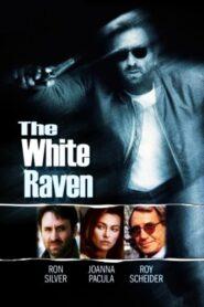 The White Raven CDA