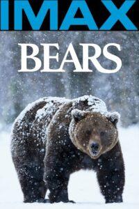 Bears CDA