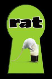 Rat CDA